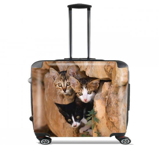 "Three cute kittens in a wall hole for Wheeled bag cabin luggage suitcase trolley 17"" laptop"