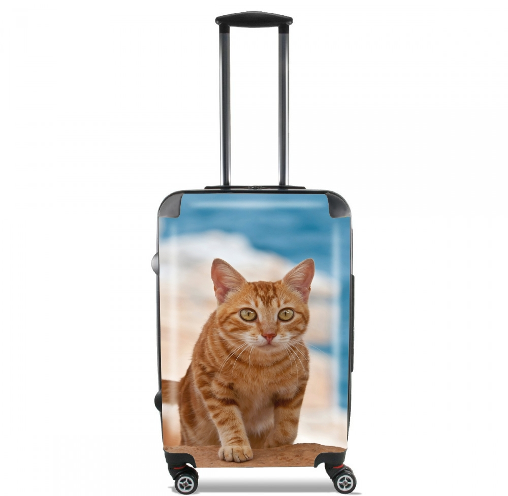 Ginger kitten on a cliff for Lightweight Hand Luggage Bag - Cabin Baggage